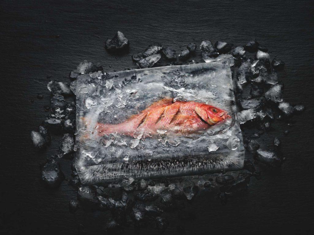 Effektvoll und exemplarisch für die revolutionären Zubereitungsmöglichkeiten des Dialoggarers ist der Fisch im Eisblock: Der Fisch ist im Eis gegart, ohne dass der umgebende Eismantel geschmolzen wäre. Foto: Miele